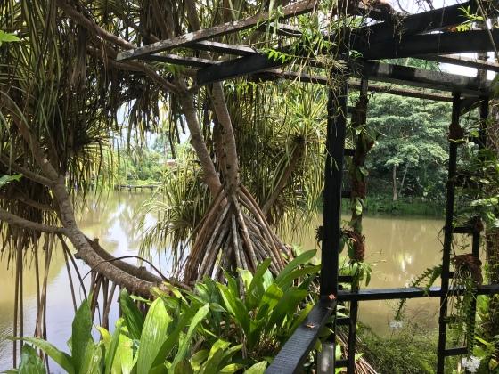 Orang Oetan Sepilok Sabah Maleisië