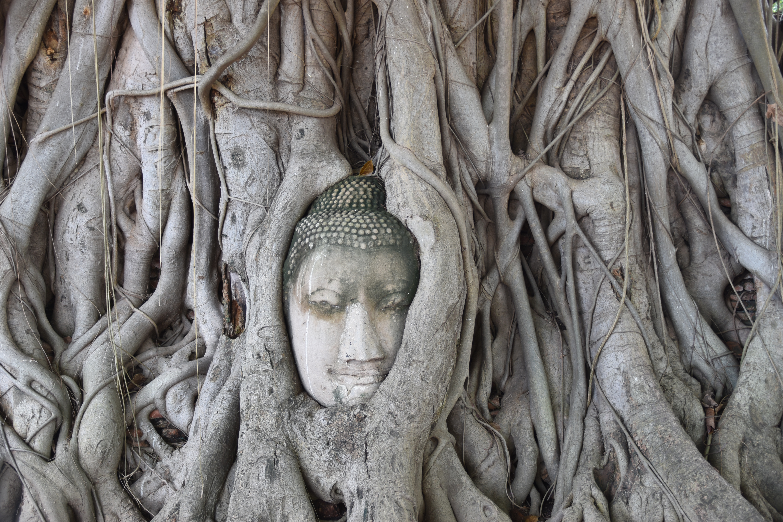 Boeddha in de wortels van een boom in Wat Phra Mahathat in Ayutthaya, Buddha